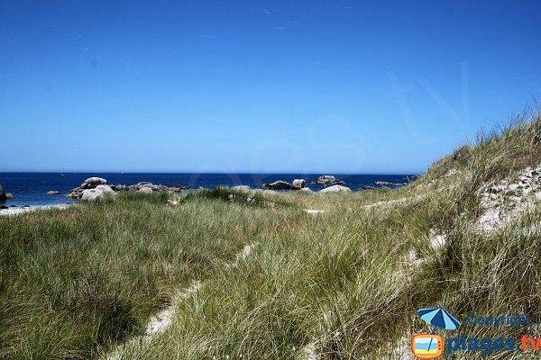 Dune sur la plage de Crémiou à Kerlouan