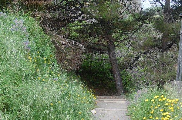 Chemin d'accès à la plage de la crique de St Florent en Corse