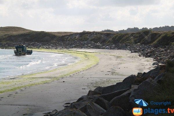 Algues vertes sur la plage surveillée de Guisseny