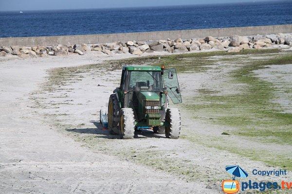 Plage de Guisseny et algues vertes - Bretagne