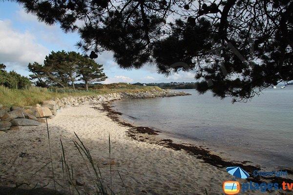 Photo de la plage aux Dames sur l'ile Grande - Pleumeur-Bodou