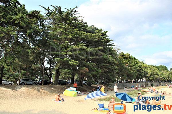 Amplitude de la plage