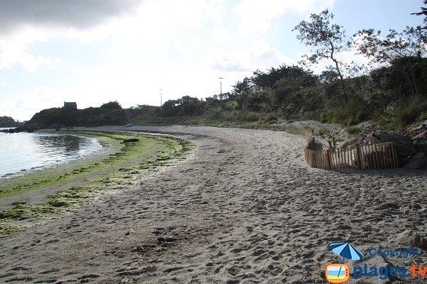 Algues vertes sur la plage du Dibenou à Guissény