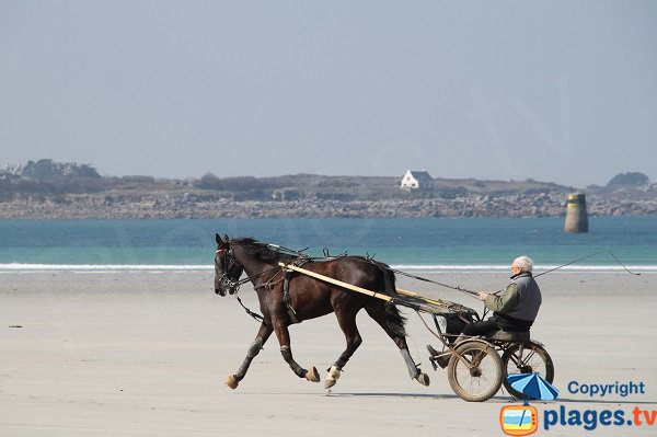 Racehorse on the beach of Santec
