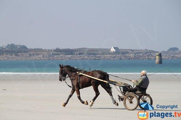 Cheval de course sur la plage de Santec