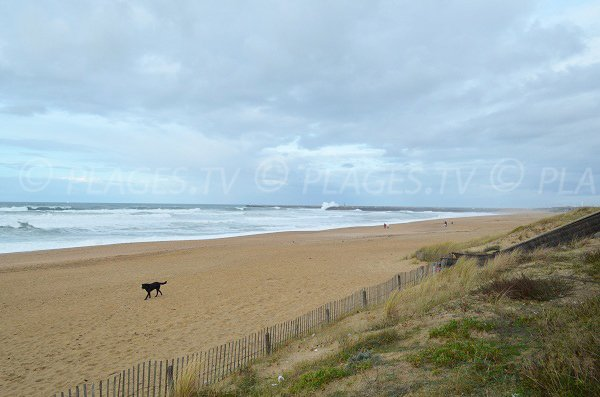 Sand beach with dunes in Anglet