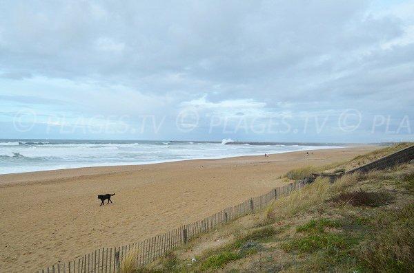 Plage de sable avec des dunes à Anglet