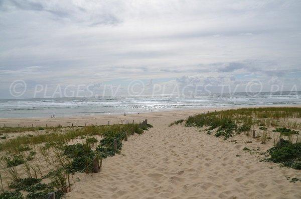 Vue sur la plage des dunes - Cap Ferret