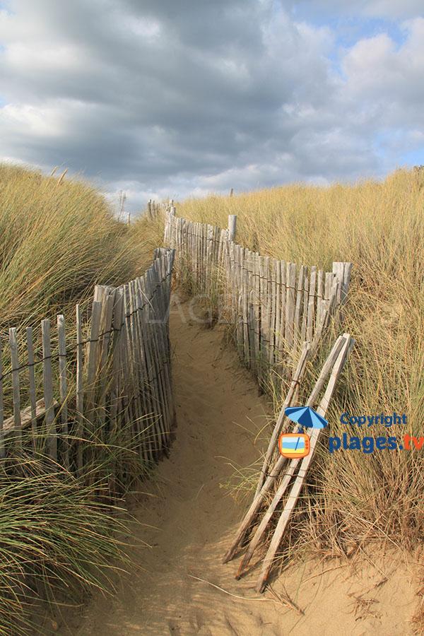 Dune d'oyats