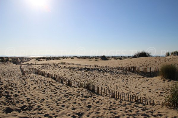 Dunes on the Espiguette beach in Port Camargue