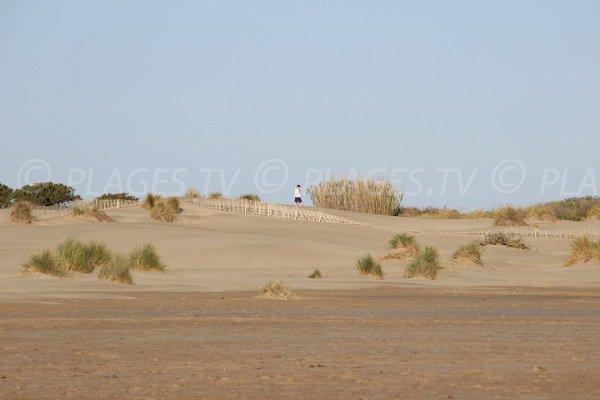 Environnement dunaire de la plage de l'Espiguette à Port Camargue