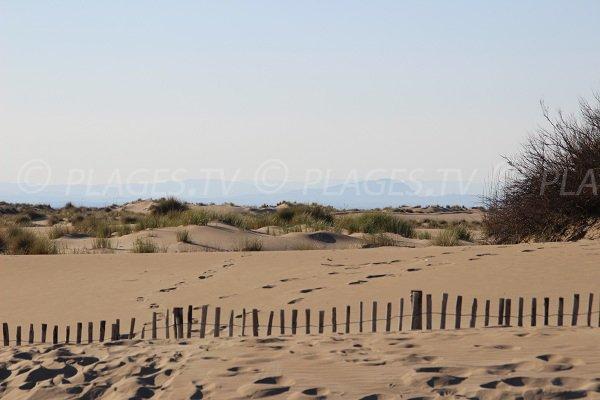 Dunes d'Espiguette au Grau du Roi