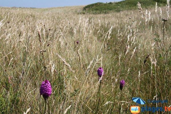 Flore et faune de l'ile d'Aganton