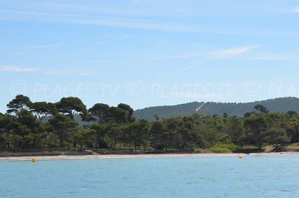 Environnement de la plage de l'Estagnol à Bormes les Mimosas dans le Var