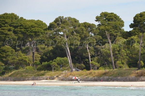 Plage de sable fin de l'Estagnol à Bormes les Mimosas