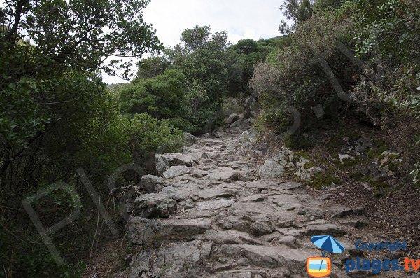 Sentier d'accès à la plage de Ficajola - Piana