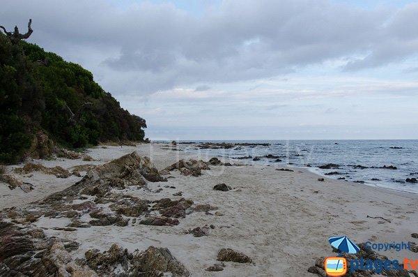 Plage de sable de Figa - Corse