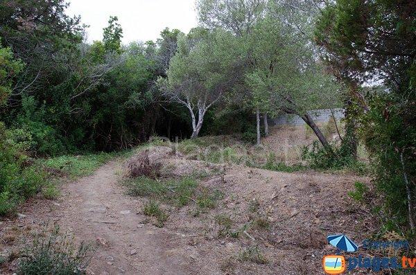 Access to Figa beach - Corsica