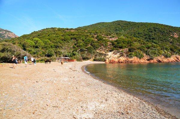 Photo de la plage de Focaghia en Corse - Girolata