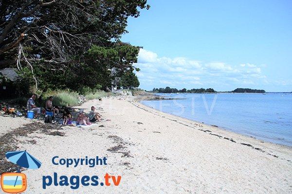 Plage ombragée sur l'ile d'Arz - Fontaine Varia