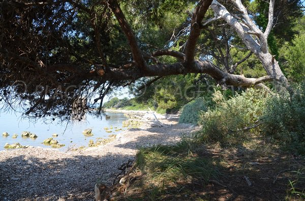 Shaded beach in St Honorat island - Fort area