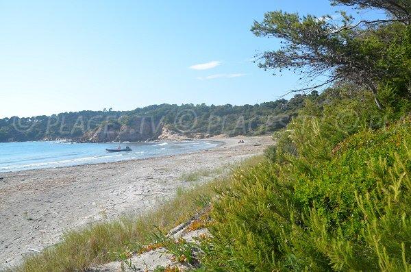 Végétation sur la plage de la Galère dans le Var
