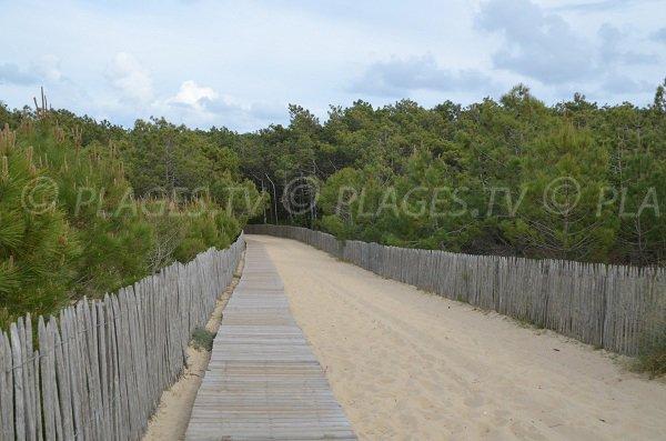 Sentier pour la plage de la Garonne dans la forêt de lège