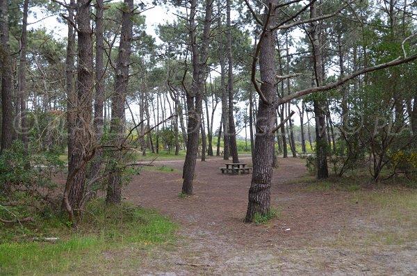 Aire de Pique-Nique sur le parking de la plage de la Garonne à Lège