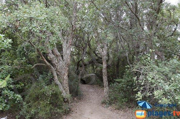 Sentier du littoral pointe de Ventilegne - Figari
