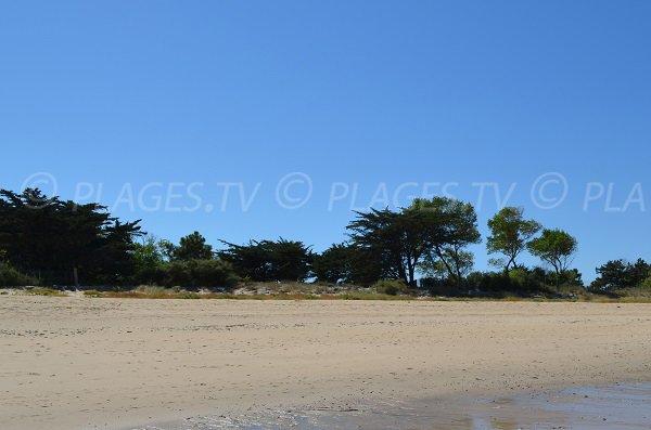 Environnement de la plage du Grand Marchais - Ile de Ré