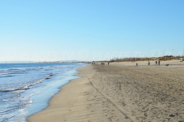 Spiaggia a La Grande Motte dove sono ammessi i cani