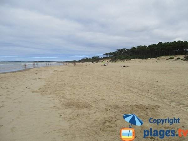 Pine woods and beach in Saint Palais sur Mer
