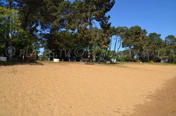 Environment of the beach of Lacanau Lake - La Grande Escoure