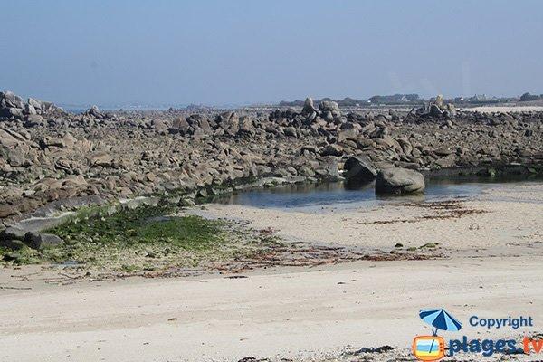 grenouillère à marée basse - Cléder