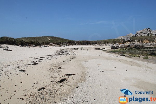 Environnement de la plage de Cléder - grenouillère