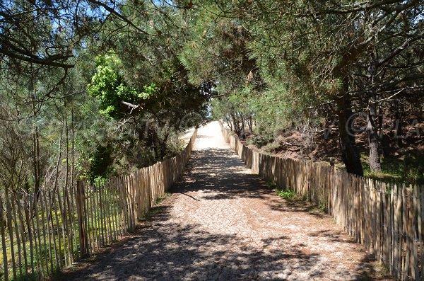 Sentier d'accès à la plage à Le Porge Océan
