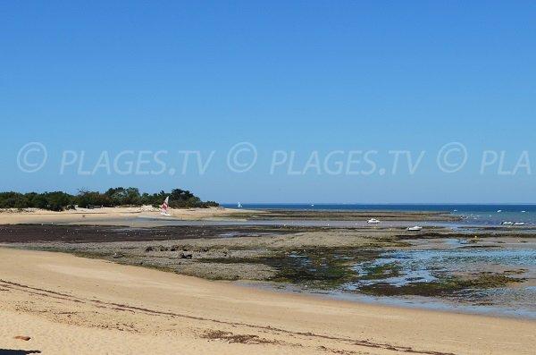 Photo de la plage du Gros Jonc aux Portes en Ré