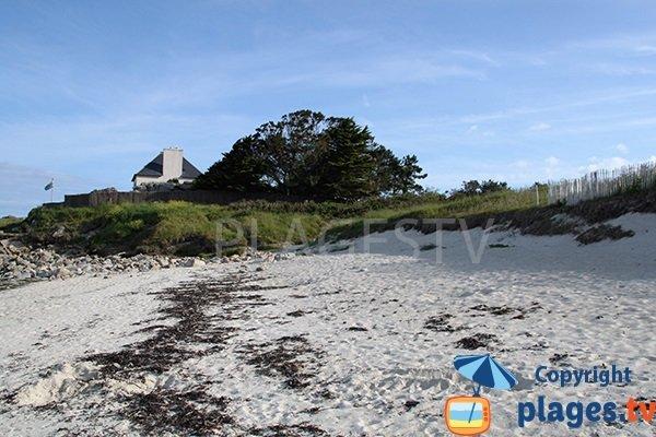 Goémon sur la plage de Gwentraez - Landunvez