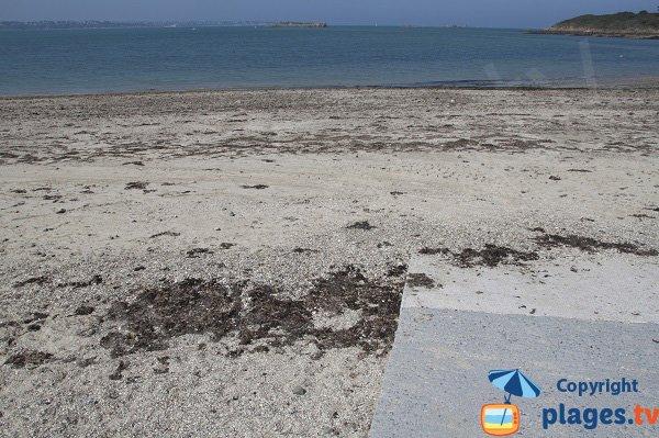 Algues sur la plage des Haas - St Jacut