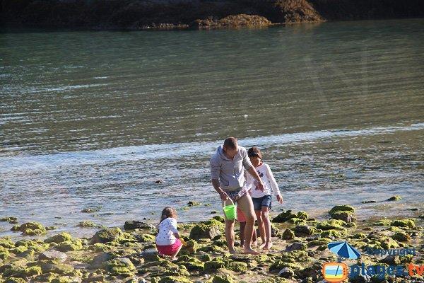 Rocks in Belle Ile - Herlin