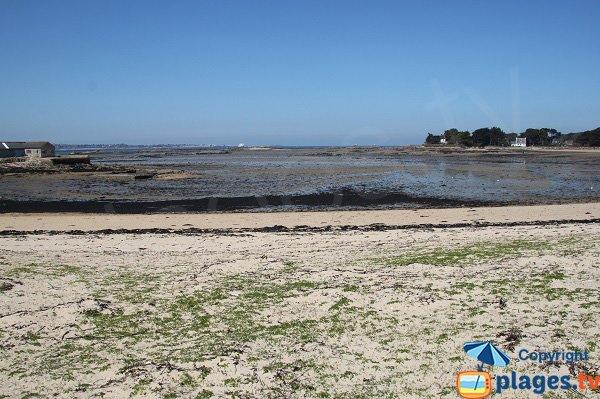 Dunes sur l'ile de Callot