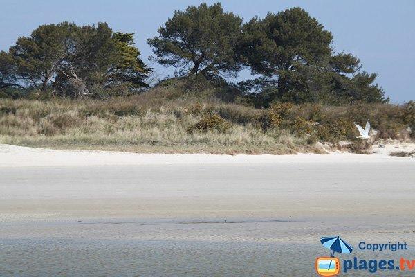 Photo of Horn beach in Santec