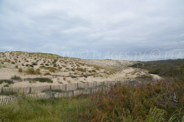 Dunes de la plage d'Hourtin