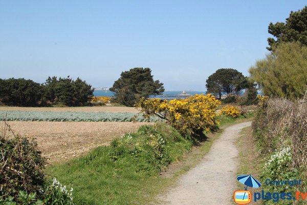 Sentier de l'ile Callot - Carantec