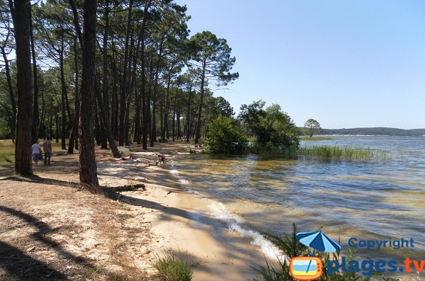 Plage au bord du lac de Biscarosse dans la pinède