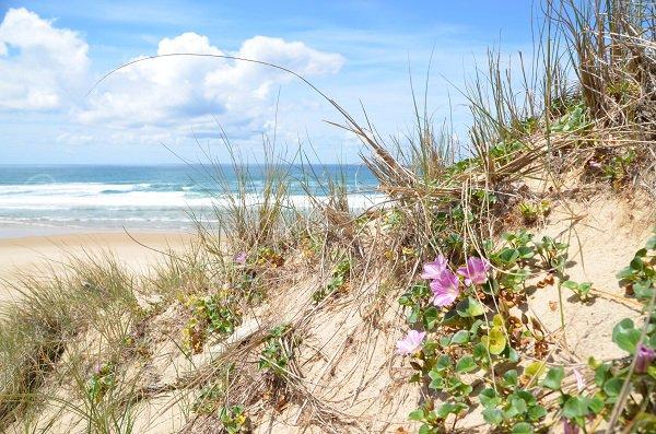Faune et flore de la dune du Jenny à Le Porge