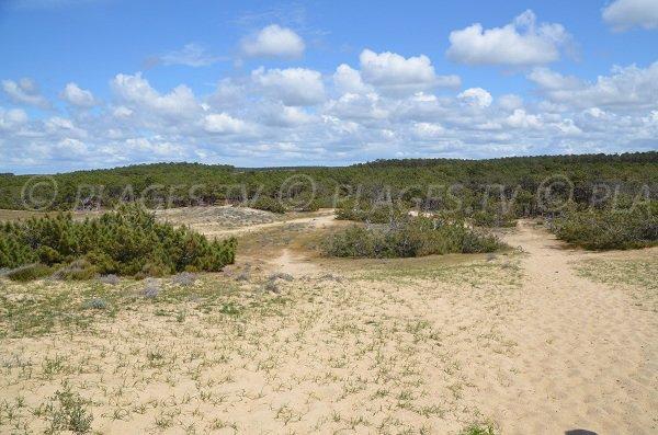 Forêt autour de la plage du Jenny