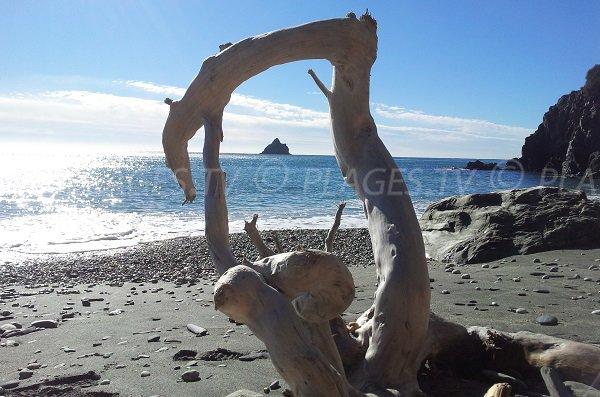 Wild beach in La Seyne sur Mer - Jonquet
