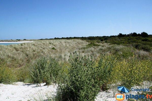 Dunes de Keremma du côté de la plage naturiste - Treflez