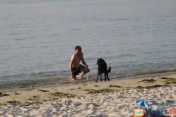 Animaux sur la plage de Keriec à Trélévern